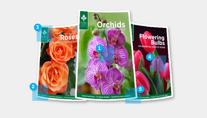 Personalized Brochures